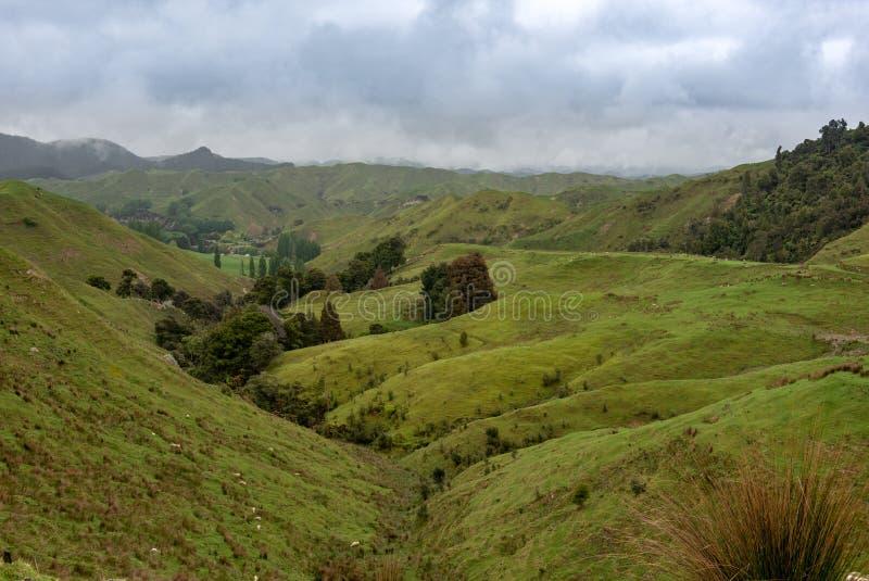 Colinas verdes y valles en un día de niebla fotos de archivo libres de regalías
