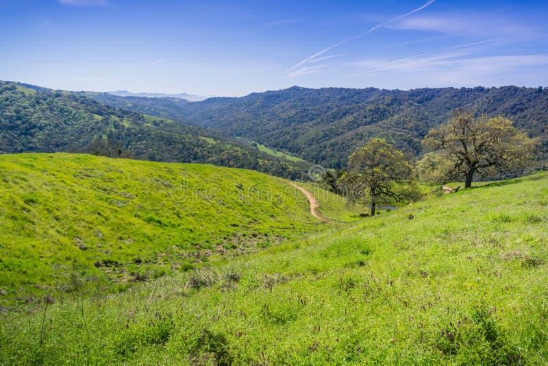 Colinas y valles verdes en el parque de estado de Henry Coe, California imagen de archivo