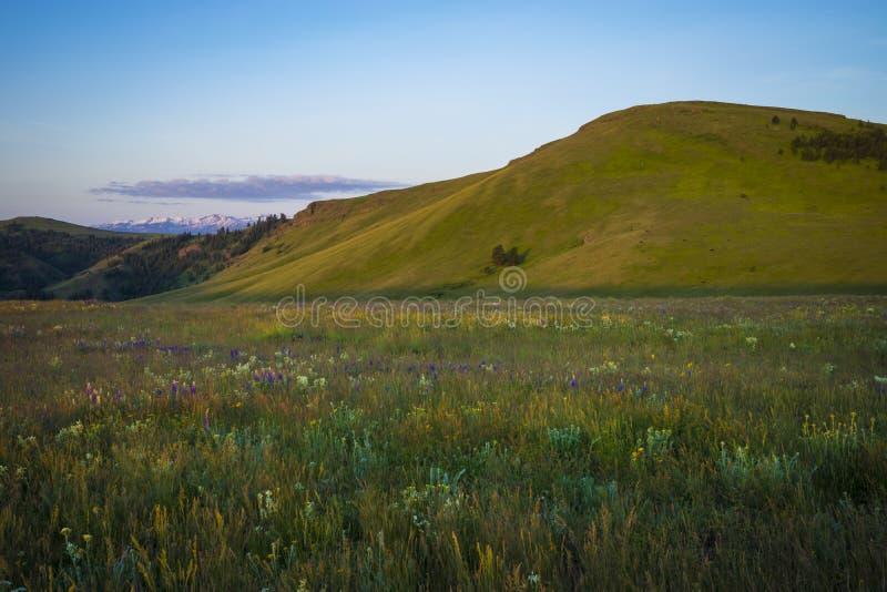 Colinas y wildflowers en Oregon imagenes de archivo