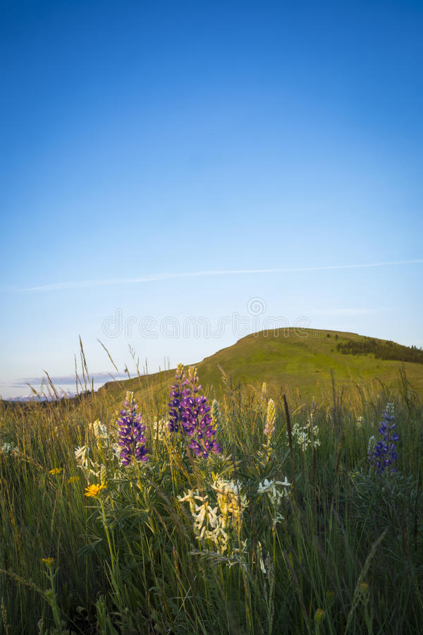Colinas y wildflowers, Oregon foto de archivo