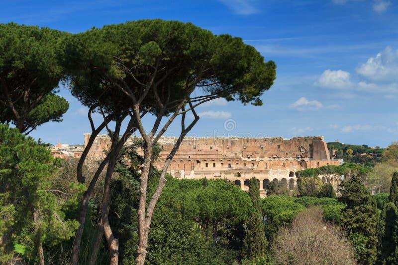 Coliseum som sett från den Palatine kullen arkivbild