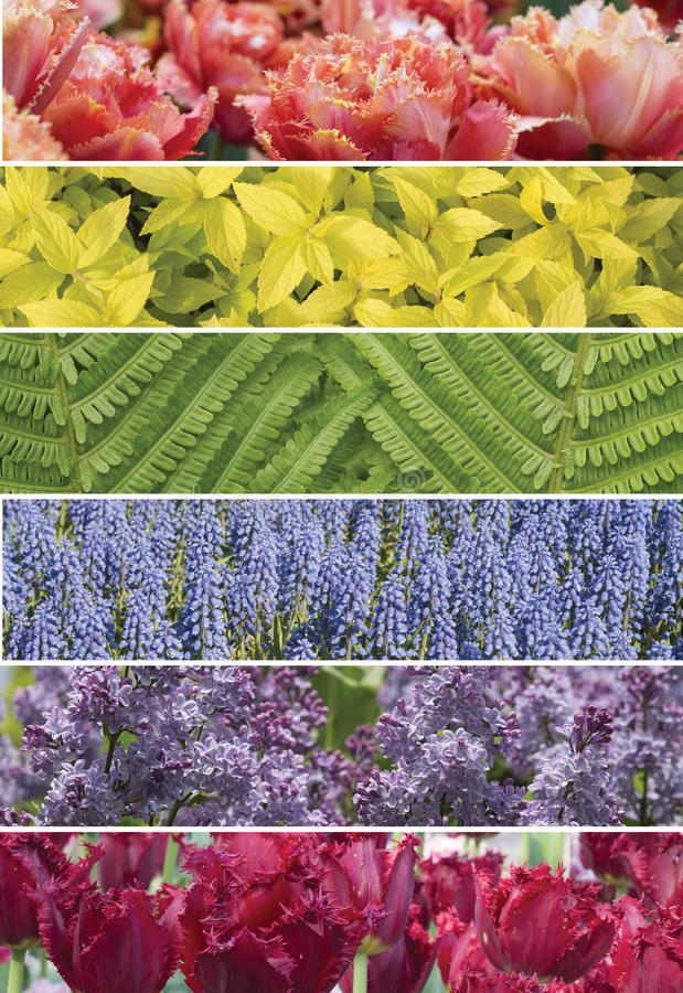 A collage of сolorful plants. Colorful collage of vertical strips, horizontal stock photos