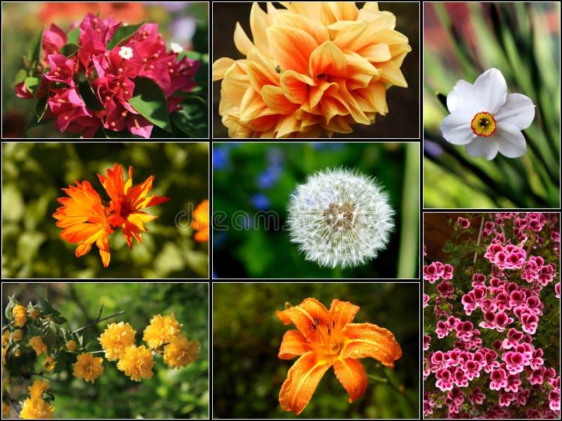 Collage 2 del fiore - XXL fotografia stock