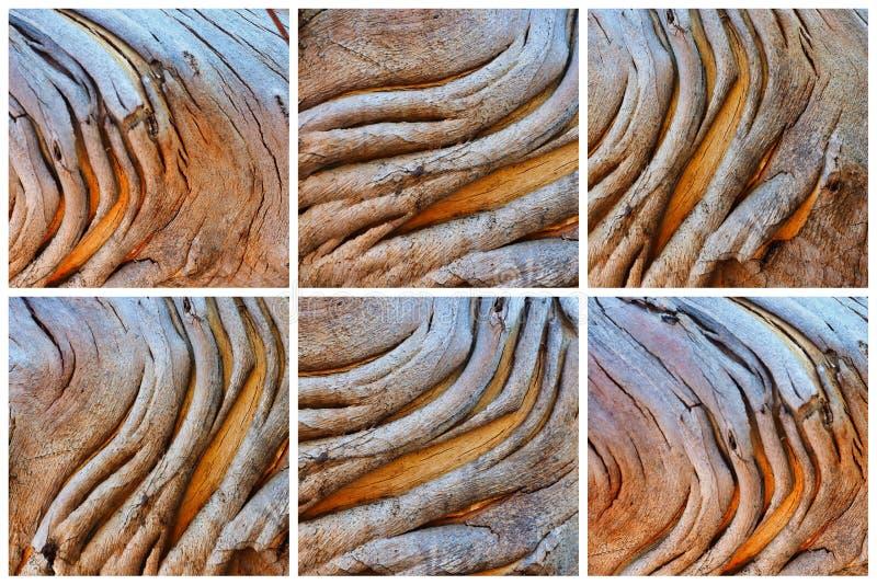 Collage abstracto del modelo de la corteza, árbol nativo australiano imágenes de archivo libres de regalías