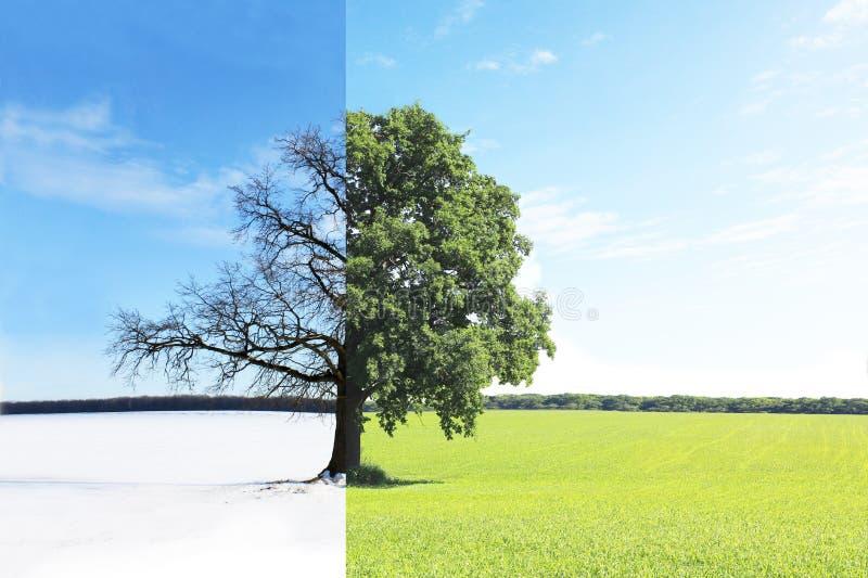 Collage abstrait avec différents côtés mélangés d'arbre avec des saisons changeantes d'été à l'hiver photos libres de droits