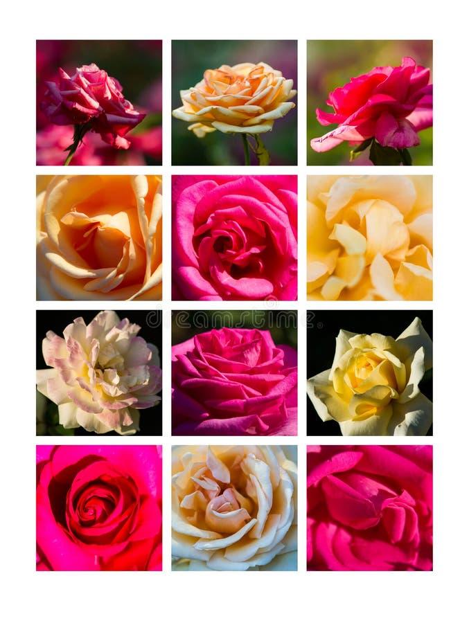 Collage agosto fotos de archivo