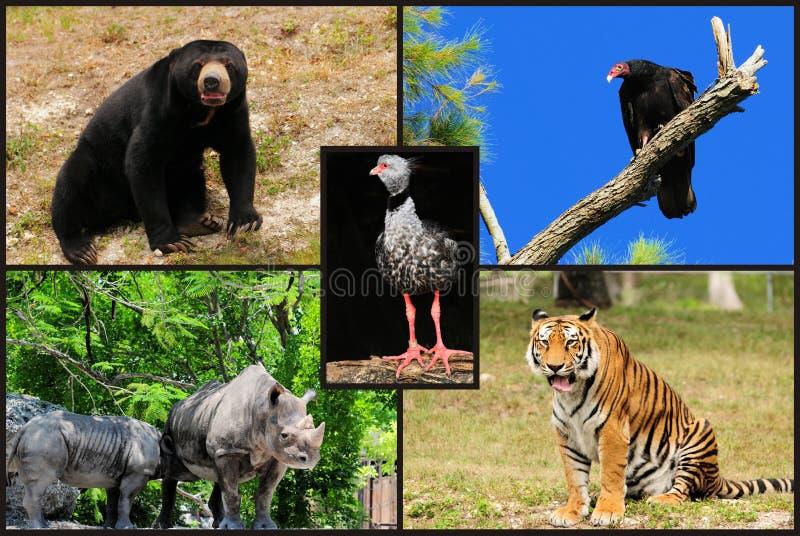 Collage animale fotografia stock libera da diritti