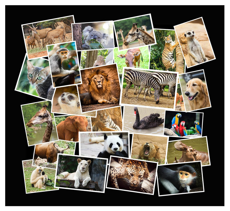 Collage animale immagine stock
