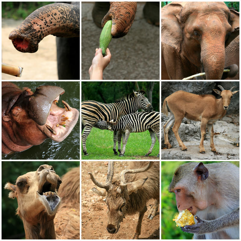 A Collage Of Animals From The Zoo Stock Image - Image ...