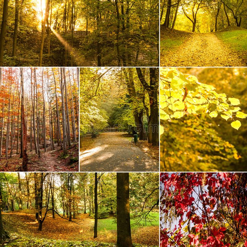 Collage with autumn collection. stock photo