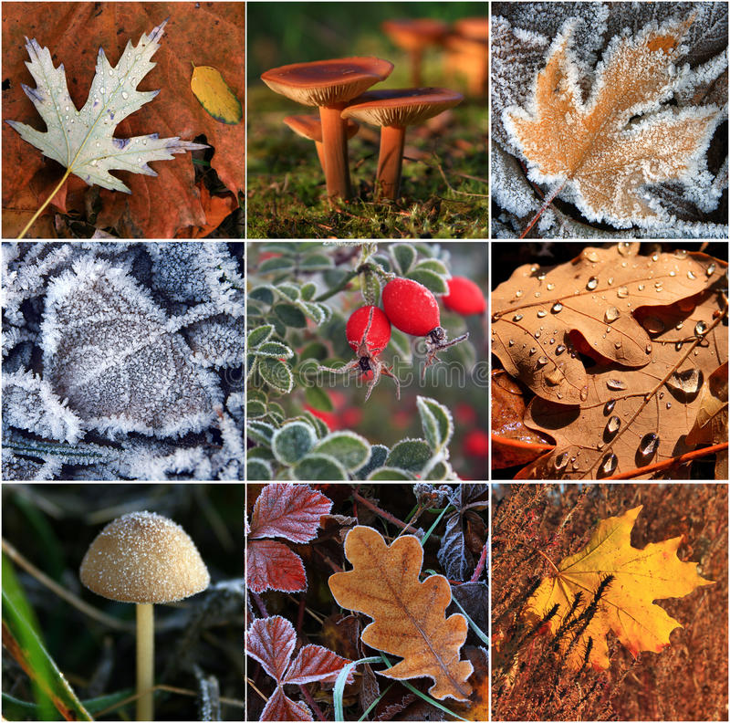 Download Collage of autumn leaves stock image. Image of design - 26667851