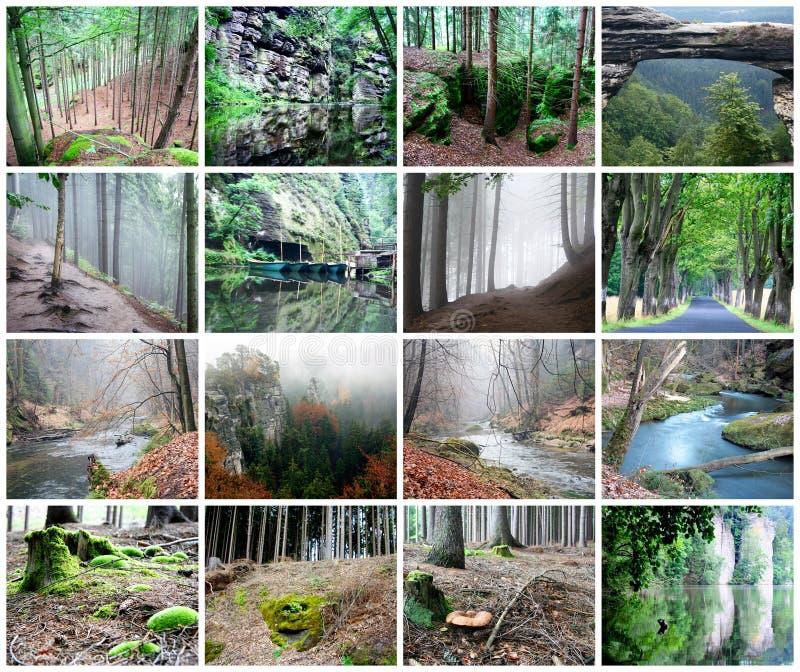 Collage av den härliga skogen royaltyfri fotografi