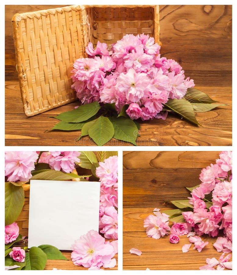 Collage av körsbärsröda blomningar för foto arkivfoto