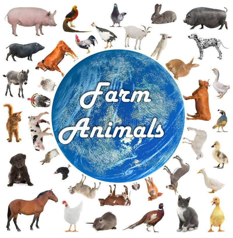 Collage av lantgårddjur stock illustrationer