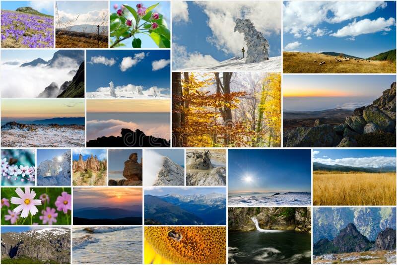 Collage av natur- och loppfoto arkivfoton