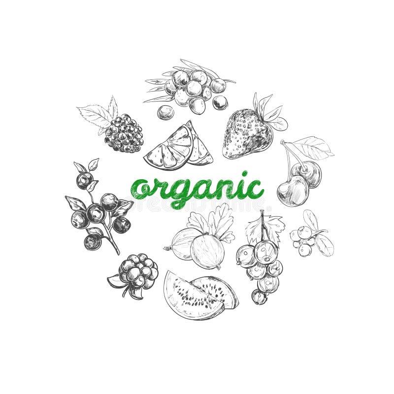 Collage av nya grönsaker Tecknad illustration för vektor hand Olika typer av bär royaltyfri illustrationer