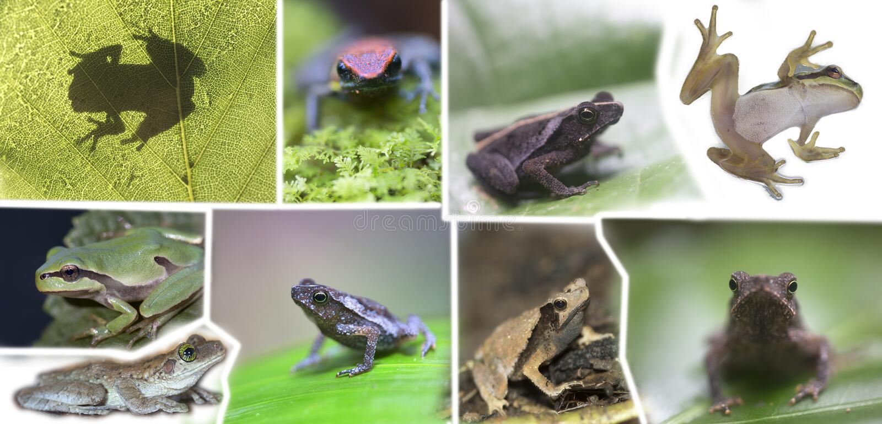 Collage av olik art av grodor royaltyfri bild