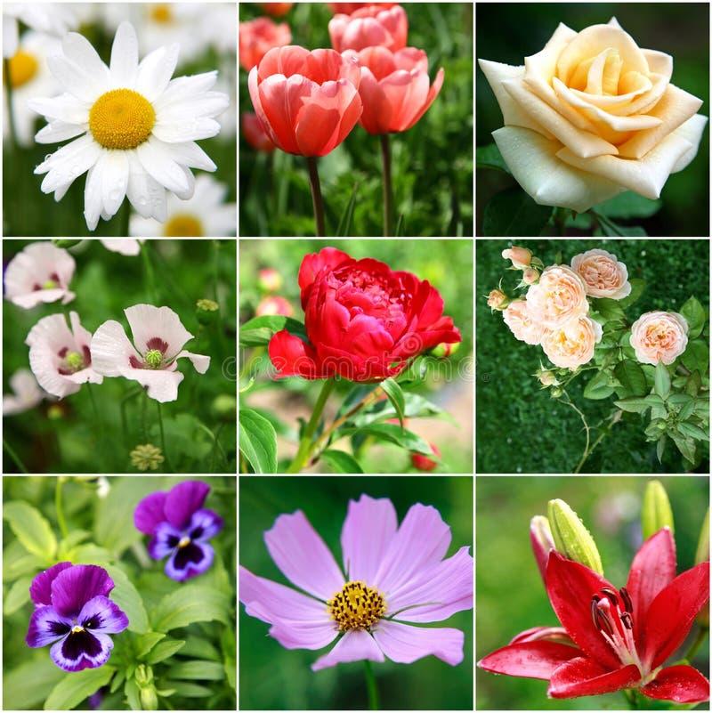 Collage av olika härliga blommor royaltyfria bilder