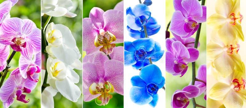 Collage av olika orkidéblommor arkivfoton