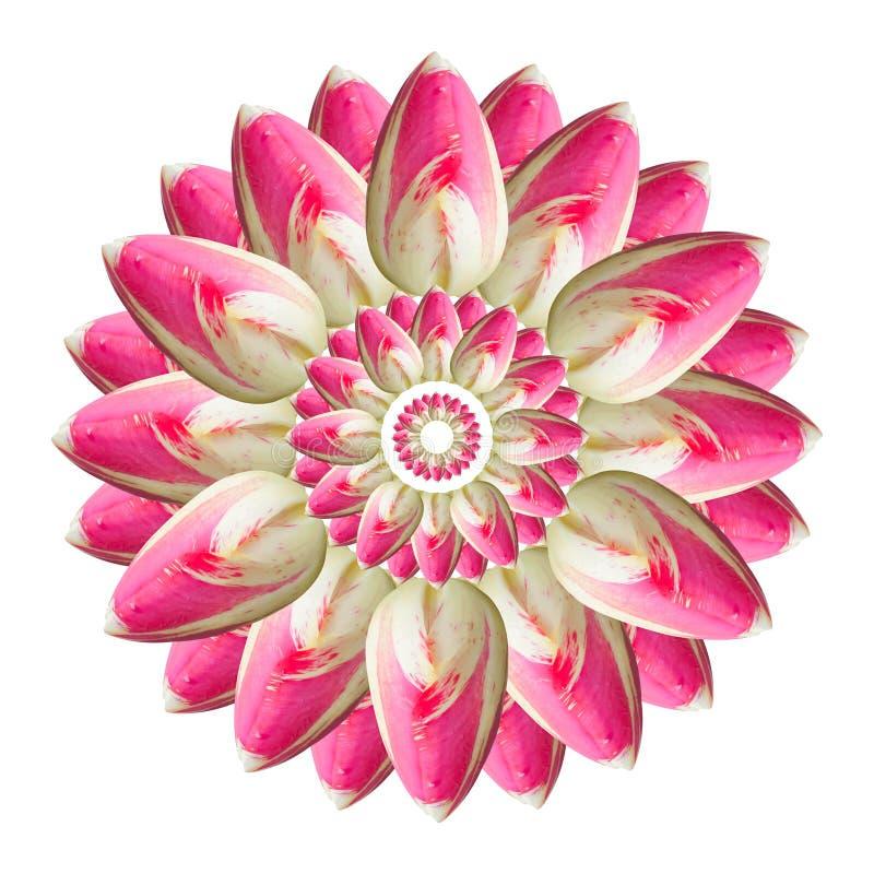 Collage av rosa h?rliga tulpanblommor p? en vit bakgrund stock illustrationer