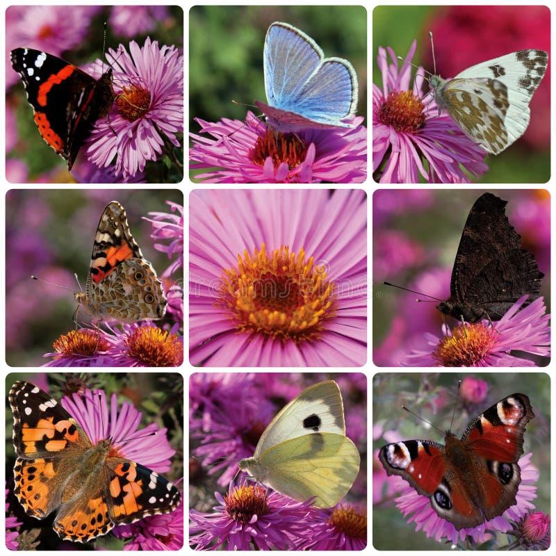 Collage avec des papillons photos libres de droits