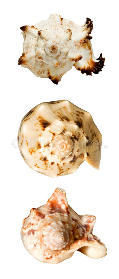 Collage avec des seashells photo libre de droits
