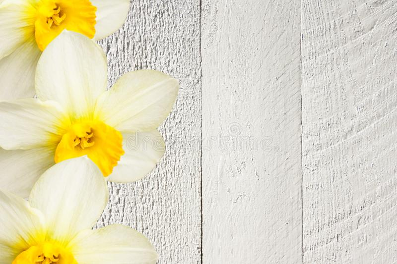 Collage of beautiful daffodil flowers on a gray wooden background royalty free stock photography
