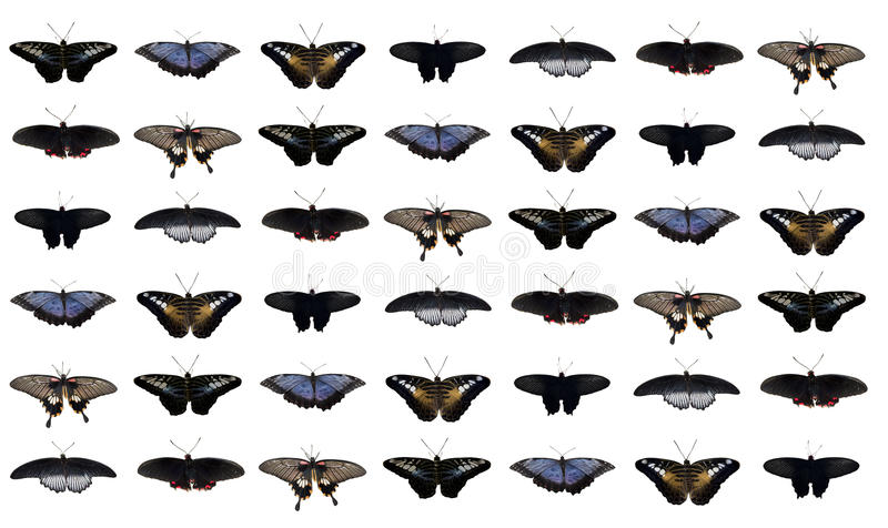 Collage from butterflies royalty free stock photos