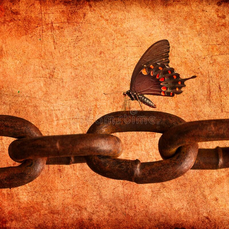 Collage of a butterfly sitting chain stock image