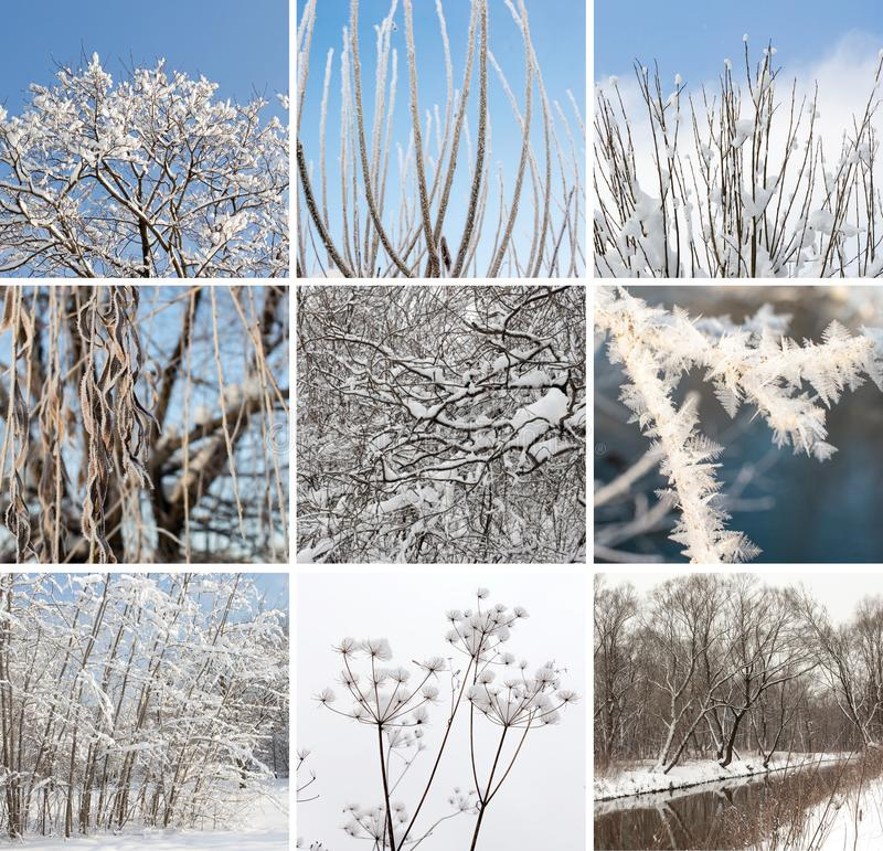 Collage carré d'hiver des paysages naturels de neige photographie stock libre de droits