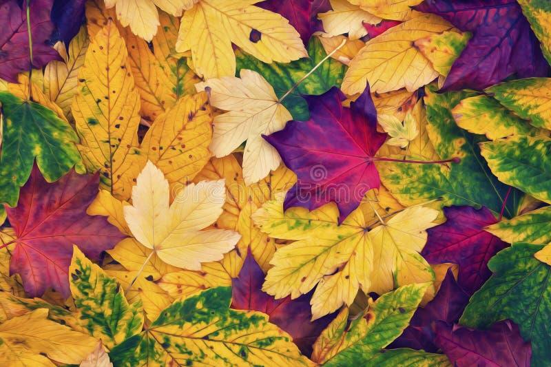 Collage coloré artistique de feuilles d'automne photos stock