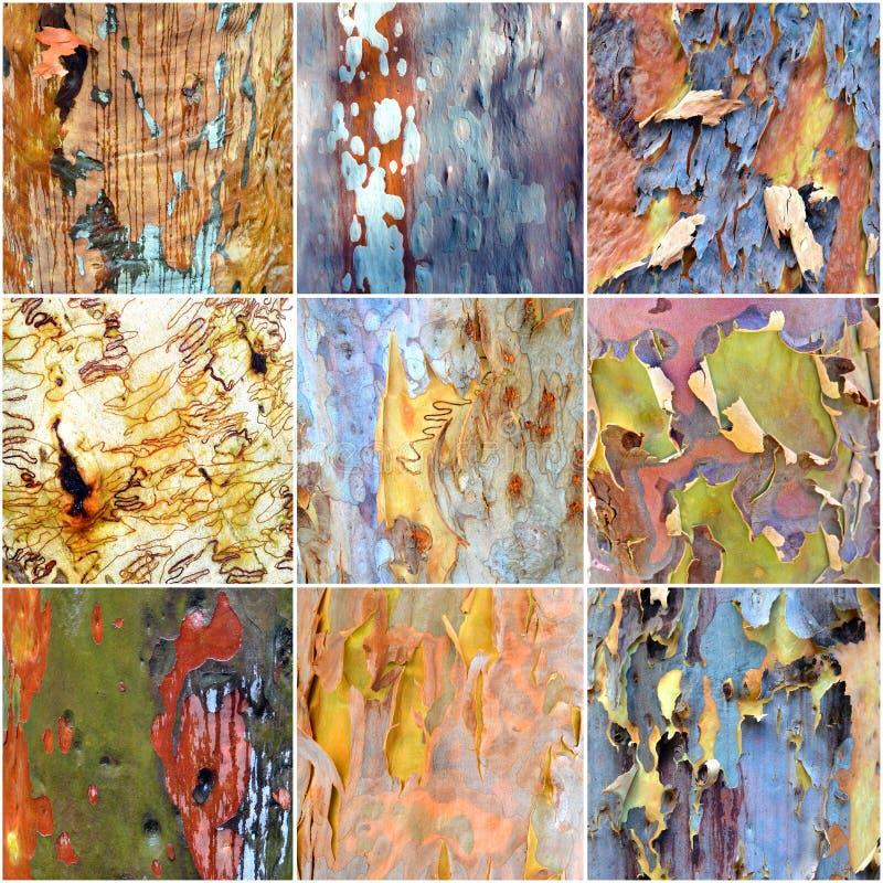 Collage of colorful Australian gumtree bark. Collage of spectacular colorful Australia gumtree (Eucalyptus) bark from the Australian bush royalty free stock images