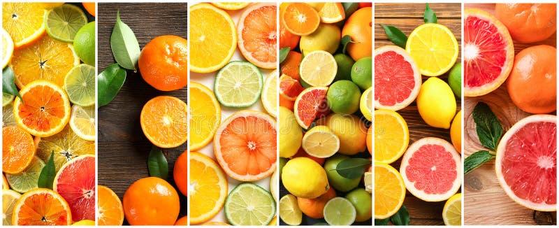 Collage con differenti agrumi maturi fotografie stock