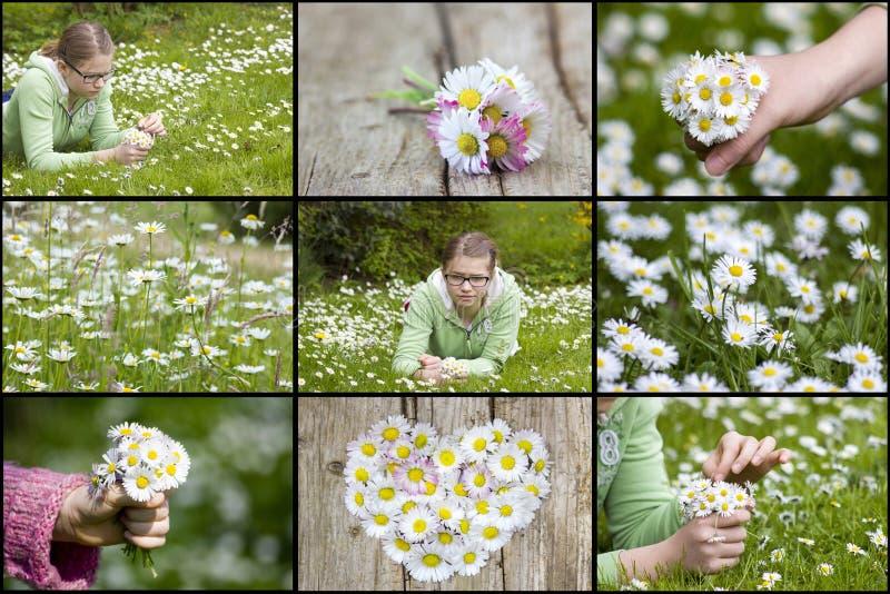 Collage con las margaritas y la muchacha foto de archivo