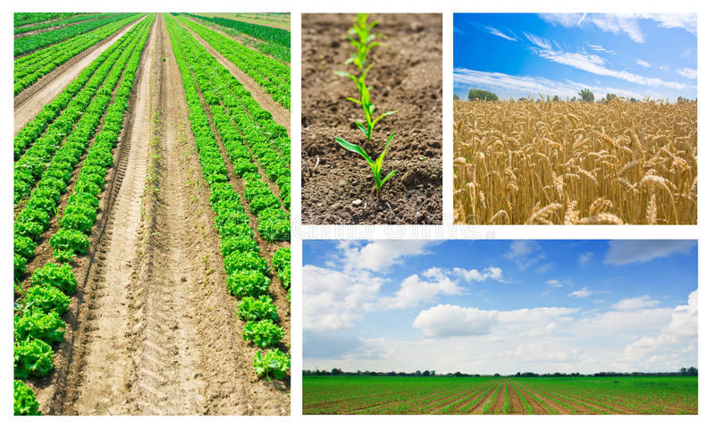 Collage d'agriculture photographie stock libre de droits