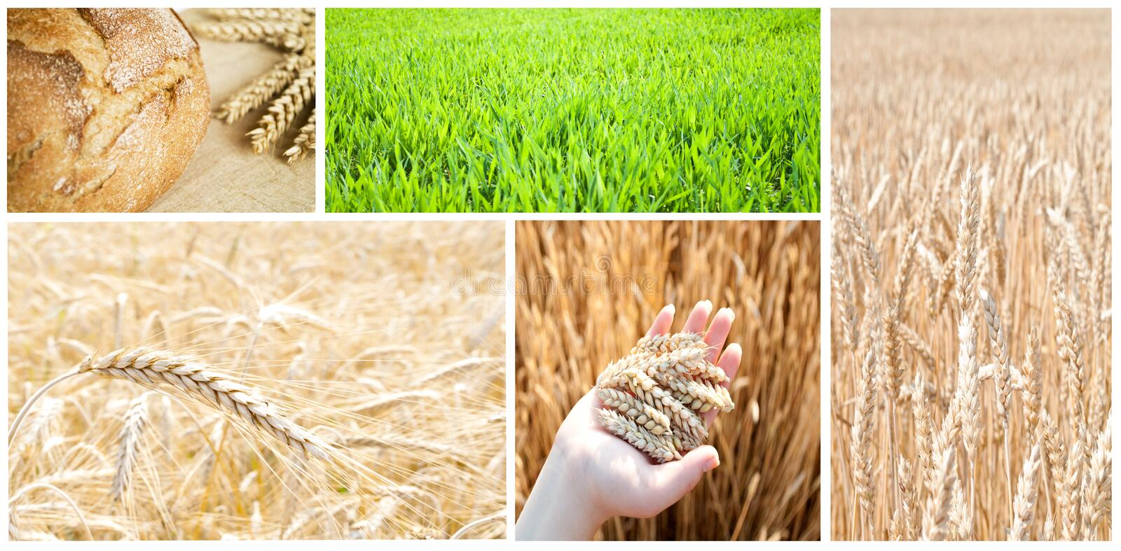 Collage d'agriculture image stock