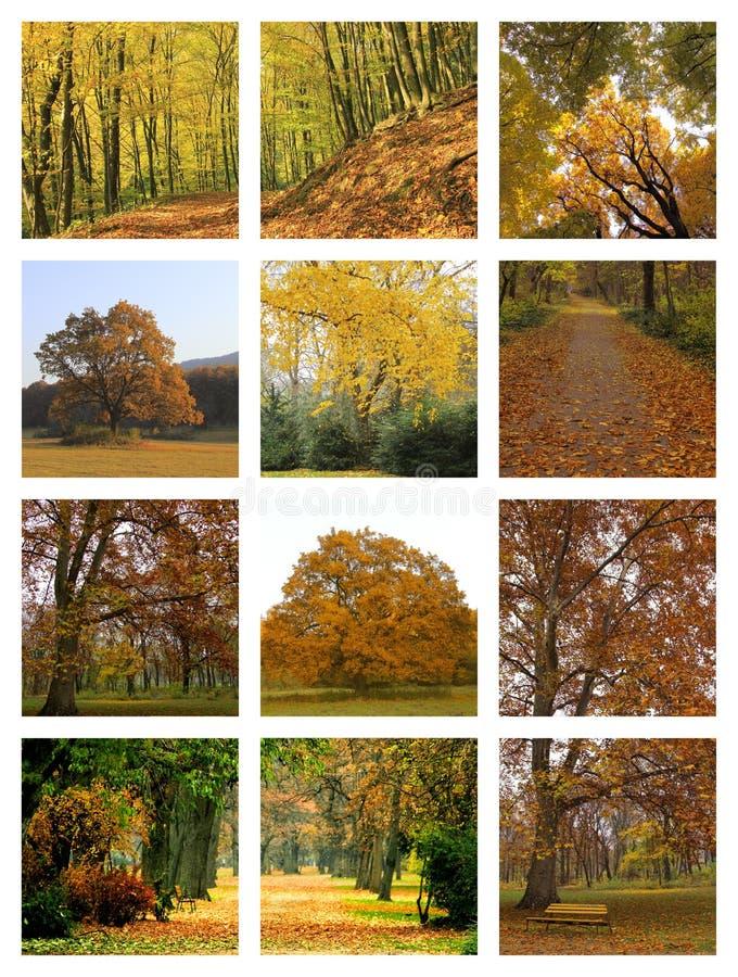 Collage D Automne Photographie stock libre de droits
