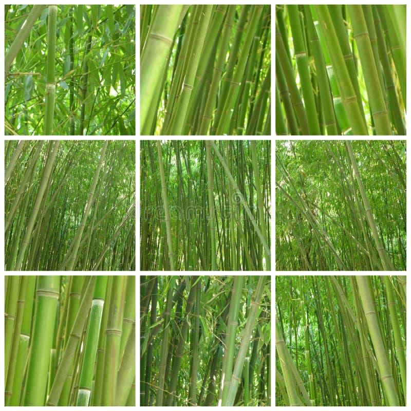 Collage d'un bambou de neuf photos images libres de droits