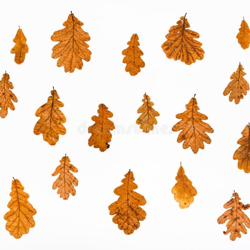 collage dalle foglie di autunno della quercia comune immagini stock libere da diritti