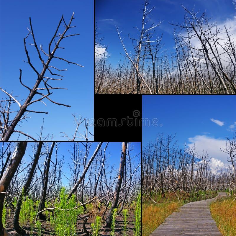 Collage De árboles Quemados Imagenes de archivo