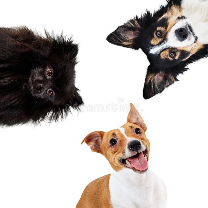 Collage de animales domésticos de diversa raza en círculo imágenes de archivo libres de regalías
