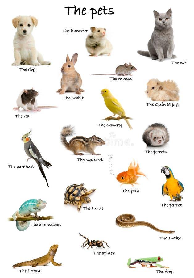 Collage de animales domésticos y de animales en inglés fotos de archivo libres de regalías
