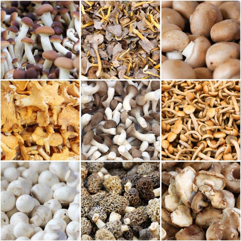 Collage de champignon photographie stock libre de droits