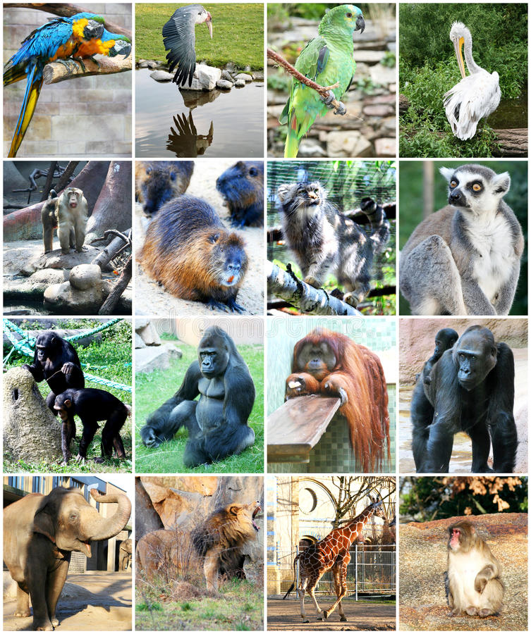 Collage de différents animaux photo libre de droits