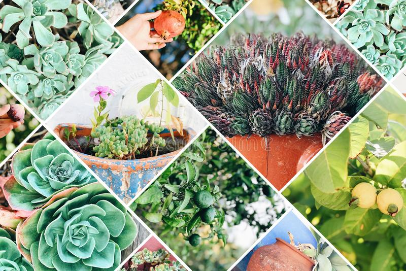 Collage de diversas flores en Portugal imagen de archivo libre de regalías