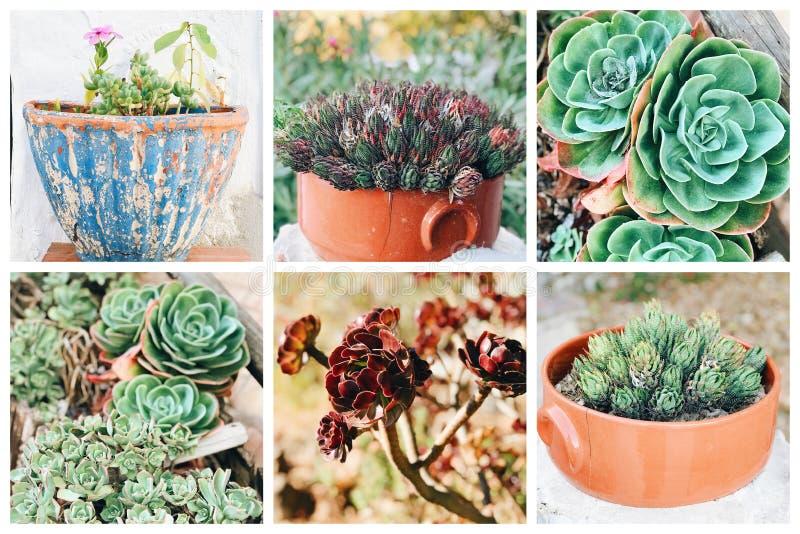 Collage de diversas flores en Portugal foto de archivo