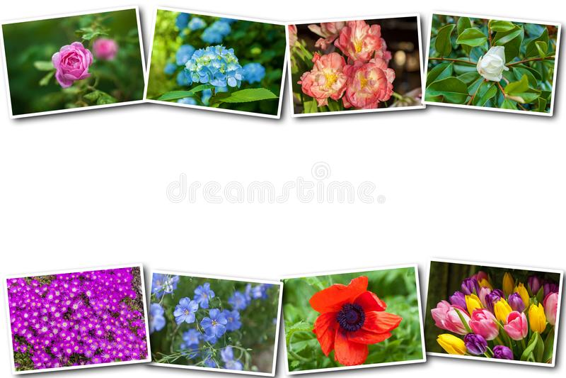 Collage de diversas flores en un fondo blanco imagen de archivo libre de regalías