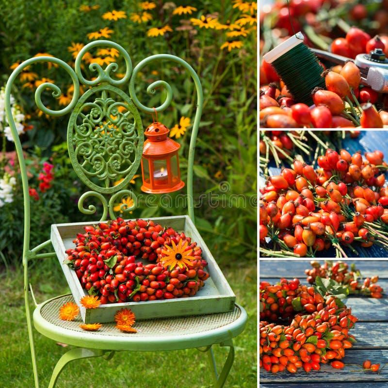Collage de diversas imágenes de una guirnalda del escaramujo foto de archivo libre de regalías