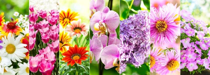Collage de diverses fleurs image stock