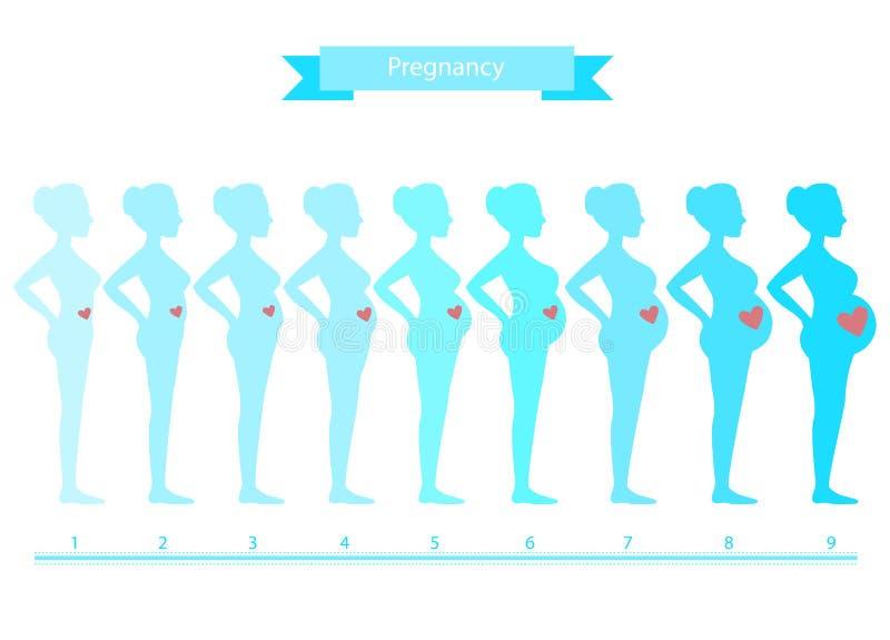 Collage de femme aux étapes de grossesse d'isolement sur le blanc, illustrations illustration libre de droits